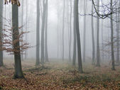 Silent autumn wood — Stock Photo
