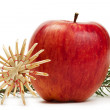 Apple straw star and a branch — Stock Photo