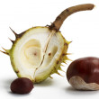Two buckeyes in front of an opened pod - Foto de Stock  