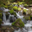 Creek in the temperate rain forest — Photo