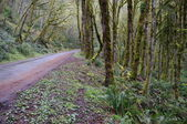 Road through the temperate rain forest — Stock Photo
