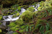 Creek in the temperate rain forest — Stock Photo