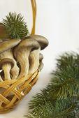 грибы вешенки — Стоковое фото