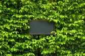 Label in green leaf background — Foto de Stock