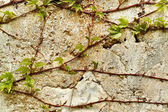 Old wall texture for background use — Stock Photo