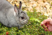 My pet little rabbit — Stock Photo