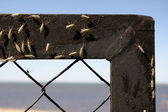 Gnats on a fence — Stock Photo