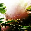 Misty Rainforest — Stock Photo
