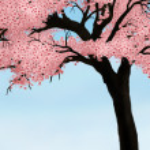 árvore flor cerejeira — Fotografia Stock  #2955436