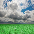 Green wheat field under cloudy sky. High Quality XXL! — Stock Photo #3513392