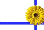 デイジーの花、白黄色い gerbera の写真。高品質 xxl — ストック写真