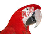 Colorful Ara Parrot isolated on white — Stock Photo