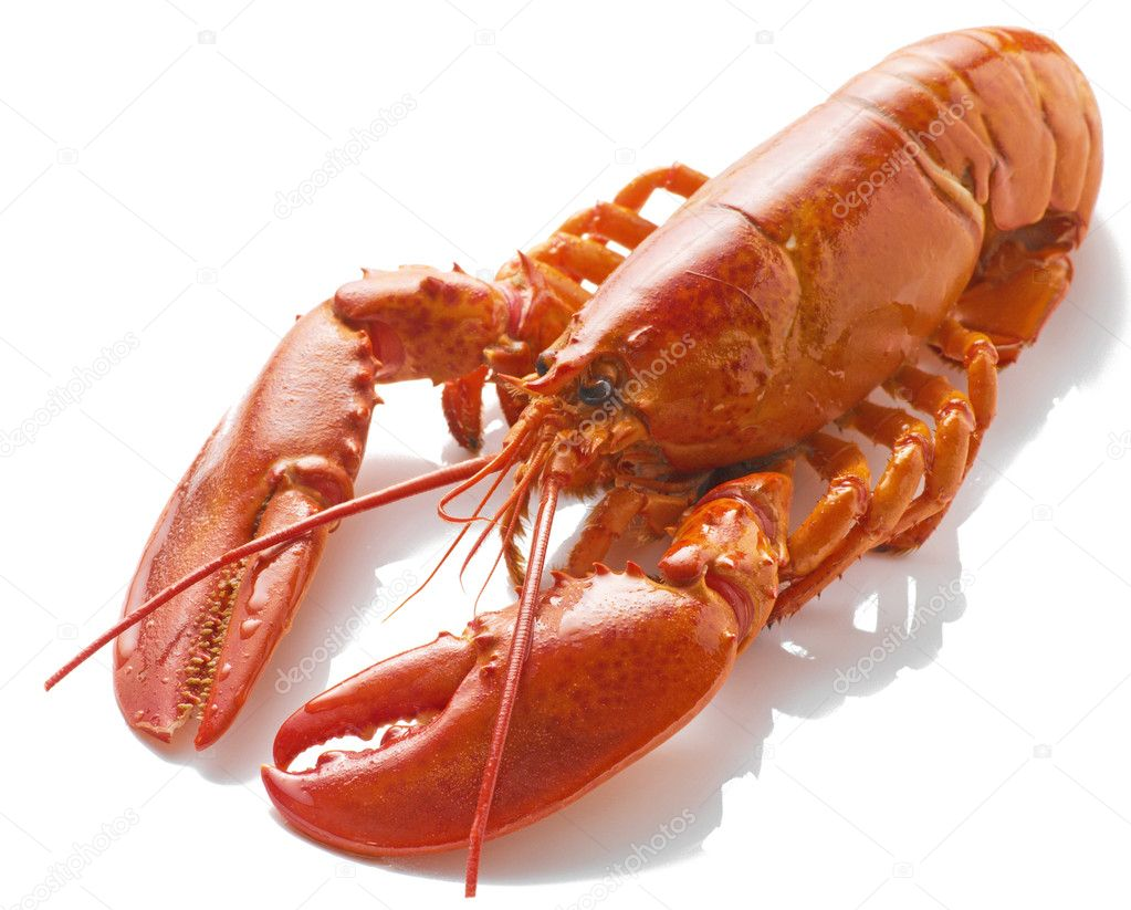 A large cooked red Lobster isolated on white background — Stock Photo © scratch #3562438