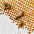 Foto Stock: Macro of working bee on honey cells