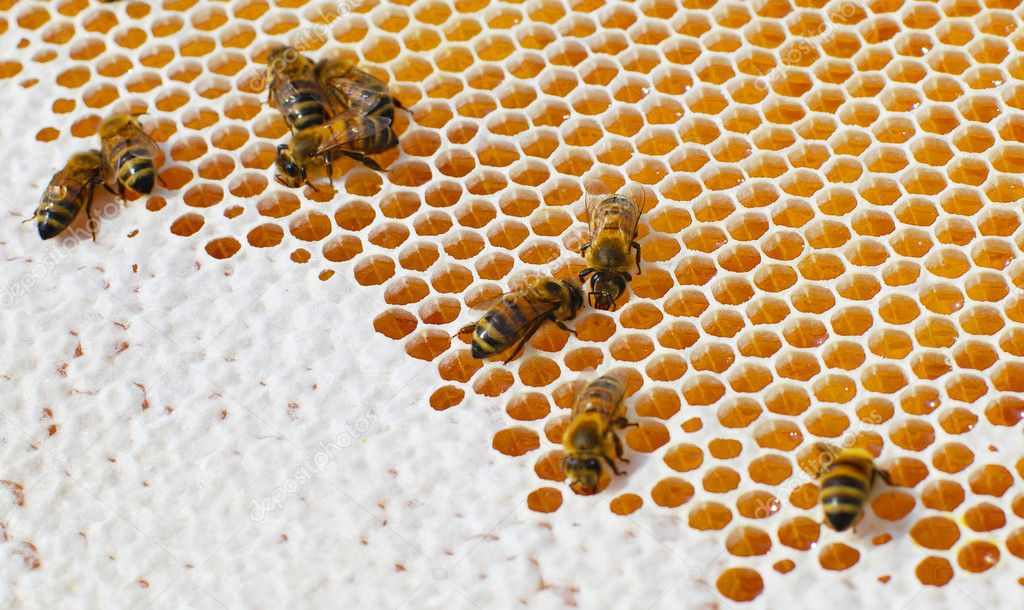 Macro of working bee on the honey cells  Stock Photo #3676424