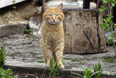 Photo of a cat — Stock Photo