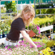 Royalty-Free Stock Photo: Pretty blond woman in gardening center