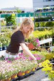 Pretty blond woman in gardening center — Stock Photo