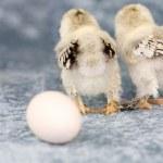 Where did the egg go — Stock Photo