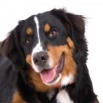 Adorable dog — Stock Photo