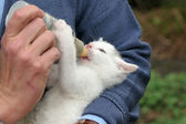 Handfeeding a baby kitten — Stock Photo