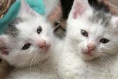 Two little kittens — Stock Photo