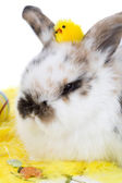 Adorable bunny with easter chicken — Stock Photo