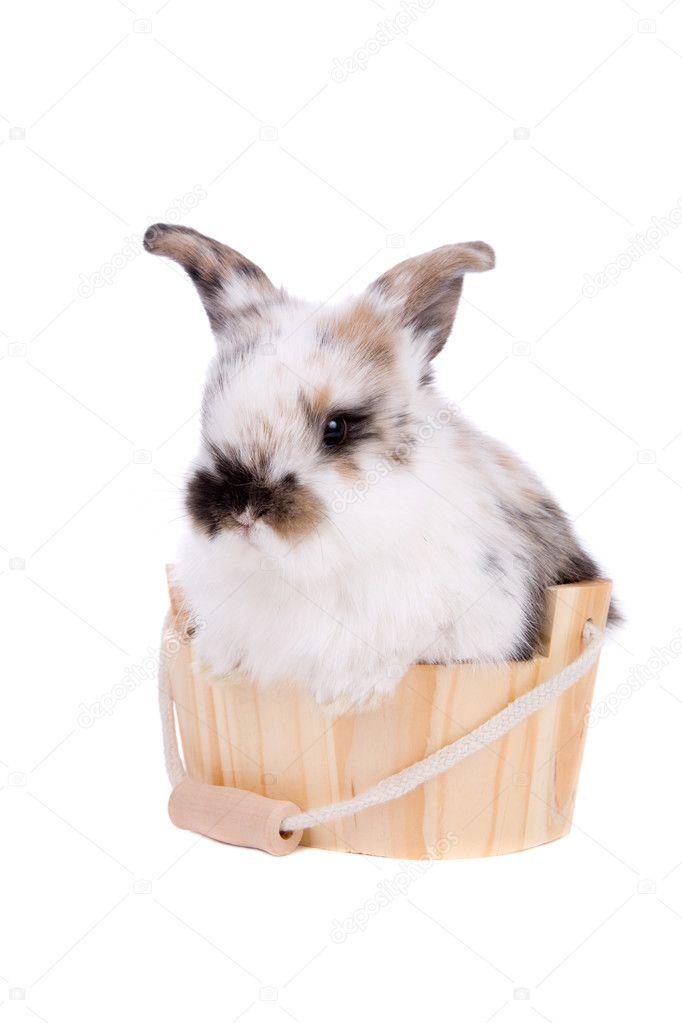 可爱的小兔子在小小的浴缸里洗澡– 图库图片
