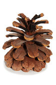 Old Dry Pinecone isolated 3 — Stock Photo