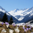 Springtime in mountain - Stock Photo