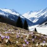Springtime in mountain — Stock Photo #2986495