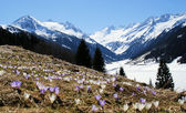 Springtime in mountain — Stock Photo