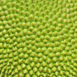 Jackfruit texture surface - Stock Photo