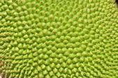 Jackfrukter textur yta — Stockfoto