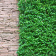 Stock Photo: Rock and small plant wall paper