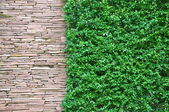 Rock and small plant wall paper — Stock Photo