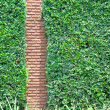 Brick wall and small plants background — Stock Photo