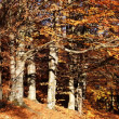 Foto Stock: Autumn edge of wood