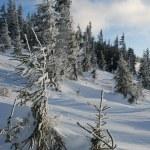 Winter hillside — Stock Photo