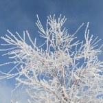 Tree against the sky — Stock Photo #3083651