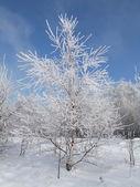 Дерево против неба — Стоковое фото