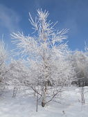 Tree against the sky — Stock Photo