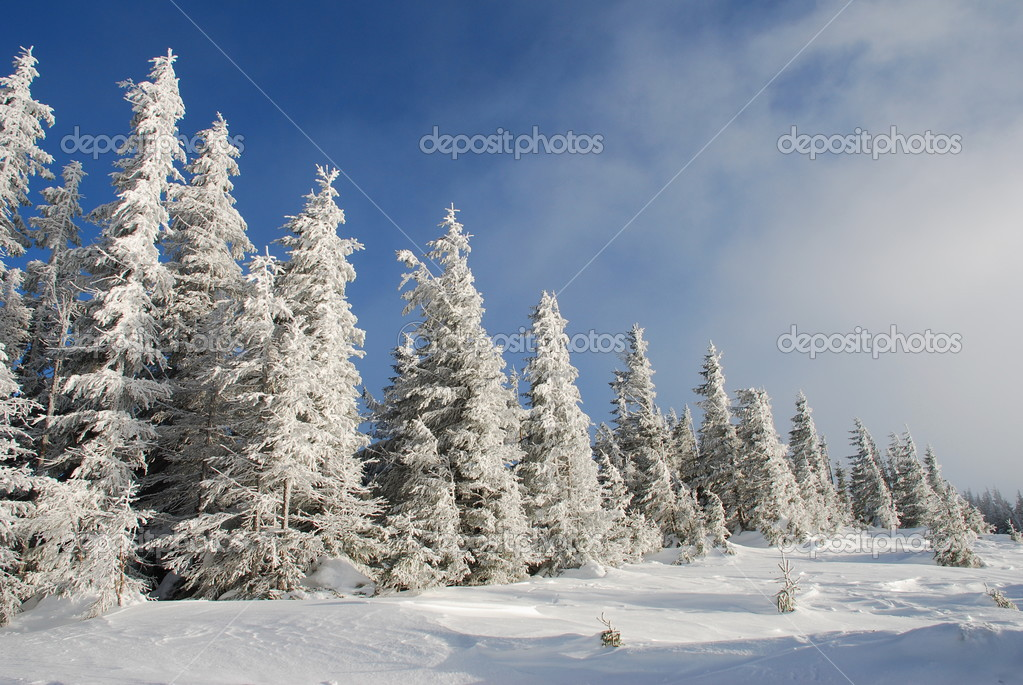 Winter hillside  Stock Photo #3083581