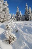 Ladera de nieve de invierno — Foto de Stock