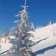 árbol de la piel blanca — Foto de Stock