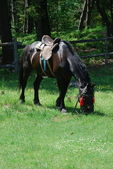 Horse on a summer glade. — Stock Photo