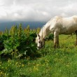 Royalty-Free Stock Photo: White horse on a green slope