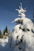 Vit päls-träd i snö — Stockfoto