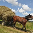 Foto Stock: Horse with cart loaded hay.
