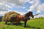 Horse with a cart loaded hay. — Stock Photo